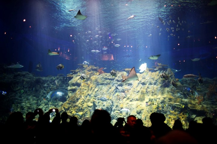 Ocean Park - Grand Aquarium